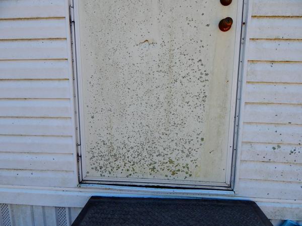 Mobile home mildew