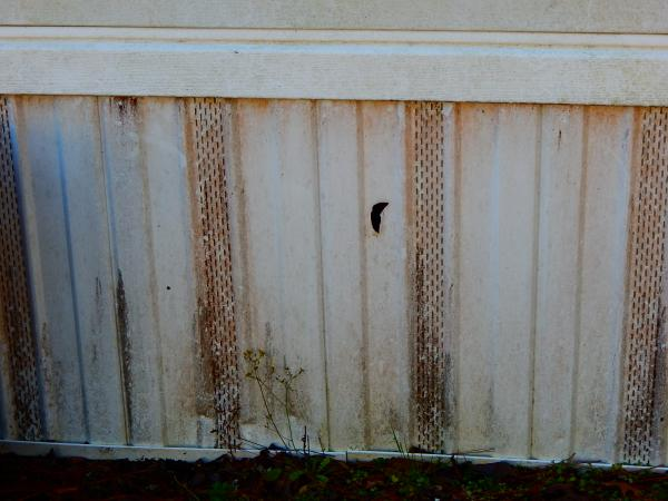 Mobile home skirting cleaning